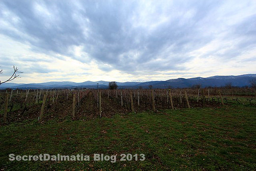 Vineyard of Grabovac